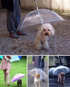 Paraguas mascotas